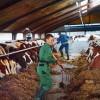melkveehouderij-zweden-stoppen_1_resize
